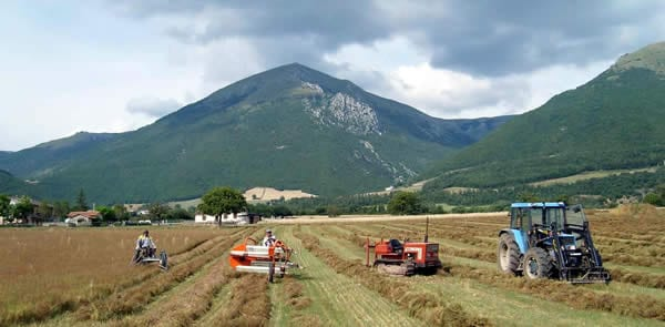 Agricoltura e produzione prodotti a Km zero 0
